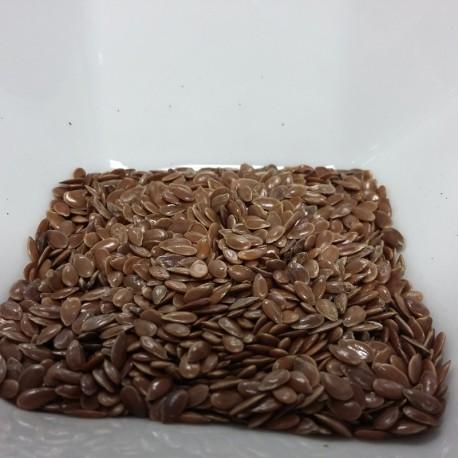 Graine de Lin